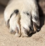 Dog paw. macro. In the park in nature Stock Image