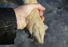 Dog Paw and Male Hand Royalty Free Stock Photos