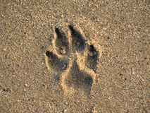 Dog paw print. Paw print of a dog in sand with broken shells Stock Photo