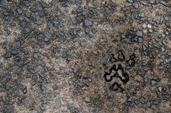 Dog paw print Stock Images