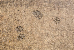 Dog paw print on asphalt. Concrete street with the dog foot stamp texture background stock images