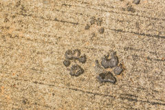 Dog paw print on asphalt. Concrete street with the dog foot stamp texture background royalty free stock photos