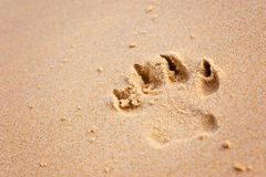 Dog paw print on beach Stock Photos