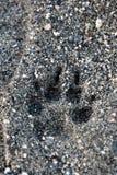 Dog paw print is on the beach. stock photos