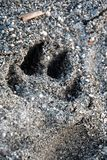 Dog paw print is on the beach.  stock photography