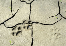 Dog paw print. Close up of dog paw print Royalty Free Stock Photos