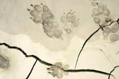 Dog paw print. Close up of dog paw print stock images