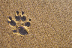 Dog Paw Print on the Sand. Dogs single paw print on the sand. Nature Backgrounds stock photos