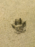 Dog paw print in the sand. Dog paw print on a beach sand surface stock images