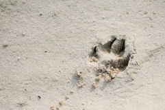 Dog paw print in sand. With copy space stock images
