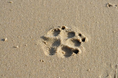 Dog paw print in sand. A dogs paw print in wet sand on the beach Stock Photos