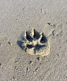 Dog paw print in sand. A dogs paw print in the wet sand on a beach stock images