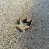 Dog paw print in the sand. A single dog paw print left in the sand stock photography
