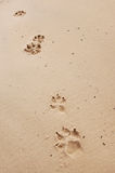 Dog Paw Prints. In the sand royalty free stock image