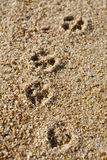 Dog paw prints. Close-up of dog's paw prints in sand on the beach stock photos