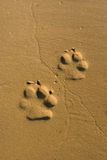 Dog paw prints. Stock Photo