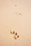 Dog paw prints on beach Stock Photos