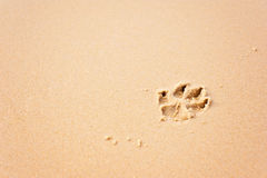 Dog paw prints on beach Royalty Free Stock Photo