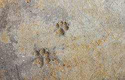 Dog paw prints. On cement floor background Royalty Free Stock Images