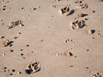 Dog paw prints. A dogs paw prints in wet sand on the beach stock image