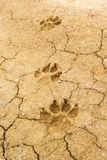 Dog paw prints. On the ground, Nature background Royalty Free Stock Photos