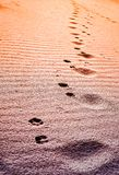 Dog paw prints in the sand at the sunset. Close view stock images