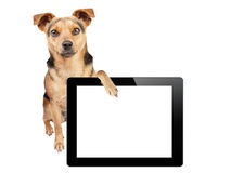 Dog paw tablet blank screen isolated. Dog with paw on tablet with blank screen isolated royalty free stock photo