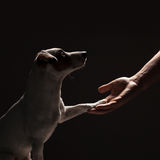 Dog paw takes the man Royalty Free Stock Photo
