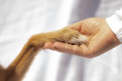Dog paw touches human hand royalty free stock images