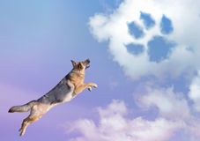 Dog paw trail in the sky clouds. Cute dog jumping in the sky clouds Royalty Free Stock Photography