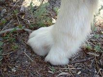 Dog paw white Royalty Free Stock Photo