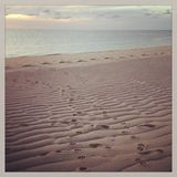 Dog Pawprints in Sand on Provincetown Beach. Dog paw prints in the sand at a beach in Provincetown, Massachusetts with black and white Instagram effect filter Royalty Free Stock Photography