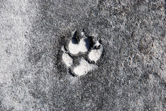 Dog paws. Print in that earths Royalty Free Stock Images