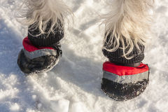 Dog Paws in Boots Royalty Free Stock Image