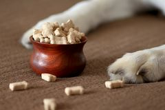 Dog paws beside a bowl of dog biscuits Royalty Free Stock Image