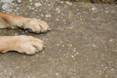 Dog paws. On the concrete, Shar Pei royalty free stock photo