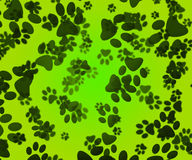 Dog Paws Green Background Stock Photos