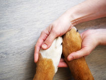 Dog paws and human hand Stock Photography