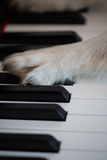 Dog paws on the piano Stock Photos