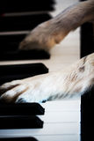 Dog paws on the piano Royalty Free Stock Photos
