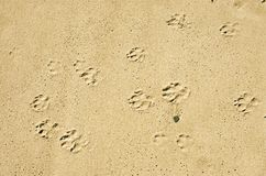 Dog paws prints in the sand Stock Image