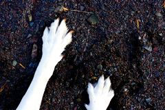 Dog paws in the sand and pebbles stock image