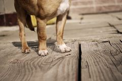 Dog paws Stock Images