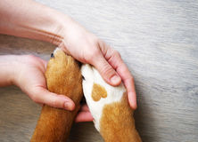 Dog paws with a spot in the form of heart and human hand Stock Photos