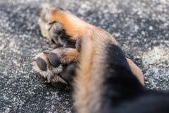Dog Paws Stock Photo