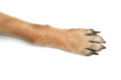 Dog paws on white background stock images