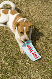 Dog with Pay Bills Sign. Brown and white spotted dog holding a sign in it's mouth that says, Pay Bills Stock Images