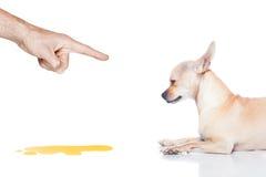 Dog pee Royalty Free Stock Image