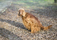 Dog pee Stock Photography