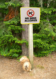 Dog pee on no dogs allowed sign.